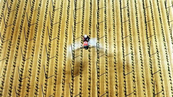 Vogelperspektive auf ein ein gold-gelbes Feld mit langen Linien und wahrscheinlich Rankhilfen. Darin kleiner Traktor der Gift verpritzt.