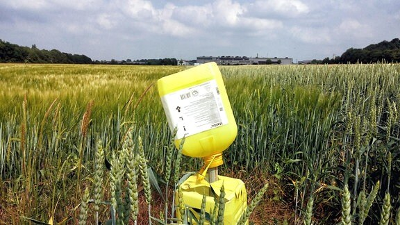 Getreidefeld mit halbhohem Getreide, darin zwei leere, kaputte Herbizid-Kanister übereinander auf einem Pfahl.