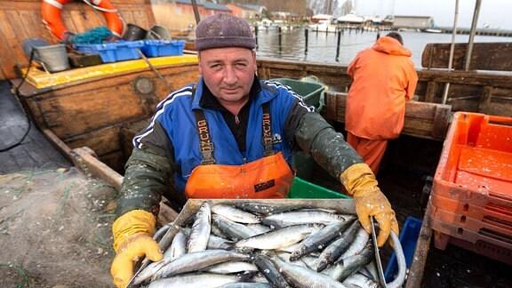 Ein Fischer trägt eine Kiste Heringe