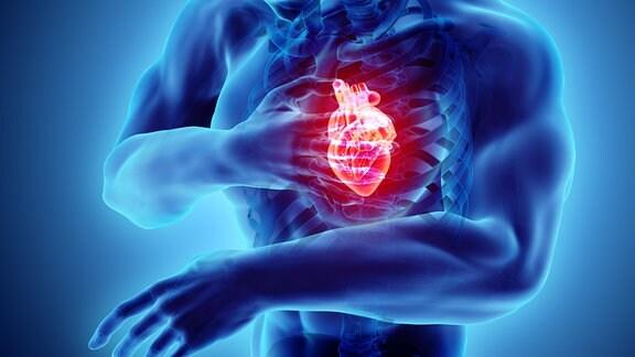 Herzmuskel Grafik