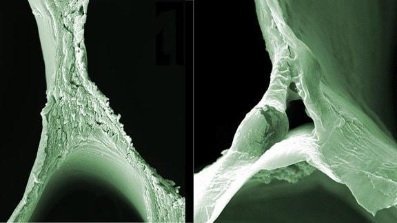 Rasterelektronenmikroskopische (REM) Aufnahmen von Balsaholz (links) und delignifiziertem Holz verdeutlichen die strukturellen Veränderungen.