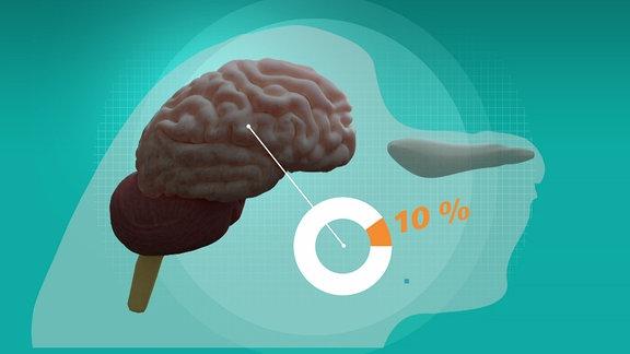 Eine Grafik zeigt ein Hundehirn.