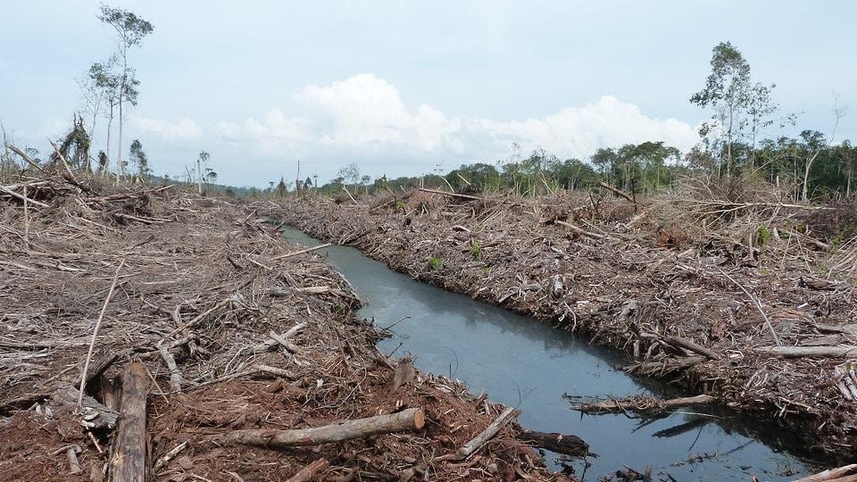 50 Prozent mehr Treibhausgase durch neue Palmölplantagen   MDR.DE