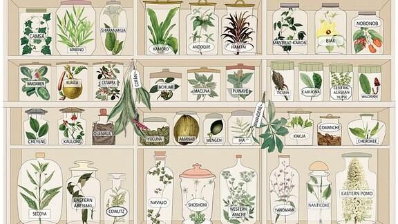 Illustration - Pflanzen