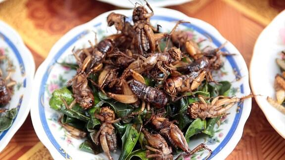 Insekten auf dem Teller