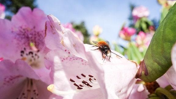 Insekten Studie Halle