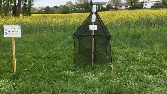 Eine Insektenfalle, die wie ein kleines Zelt aussieht steht am Rande eines Rapsfeldes, im Hintergrund sind Häuser zu sehen.