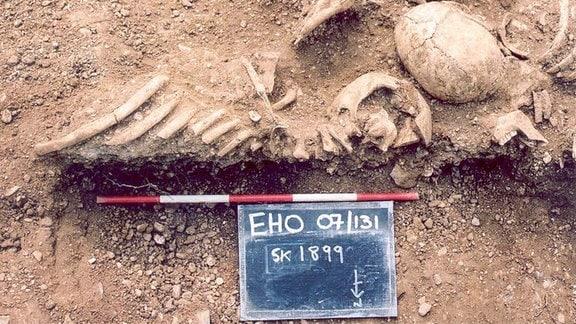 Massakrierte Wikinger aus dem 10. Jahrhundert in Oxford