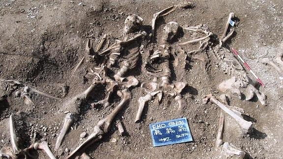 Massengrab mit  Skeletten von massakrierten Wikingern