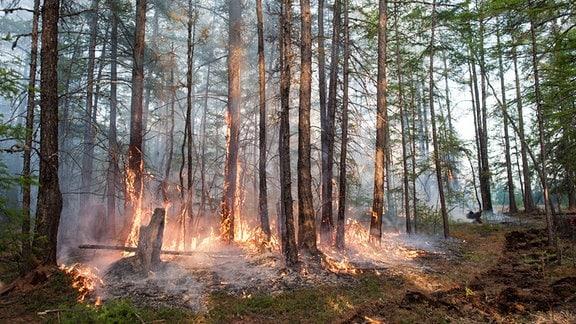 Brennender Wald in Jakutien