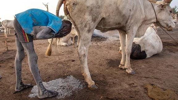 Ein Junge duscht in dem Urin einer Kuh