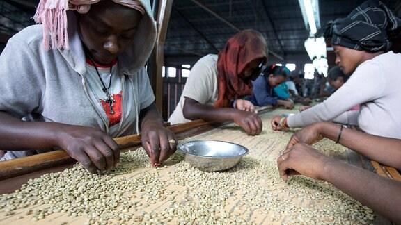 Kafffeebohnen Auslese in Äthiopien