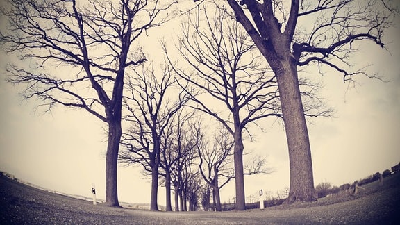 Weitwinkelige, mit Fish-Eye-Effekt verzerrte Froschperspektive von Kahlen Bäumen in einer Allee mit grau-braunem Himmel im Hintergrund.