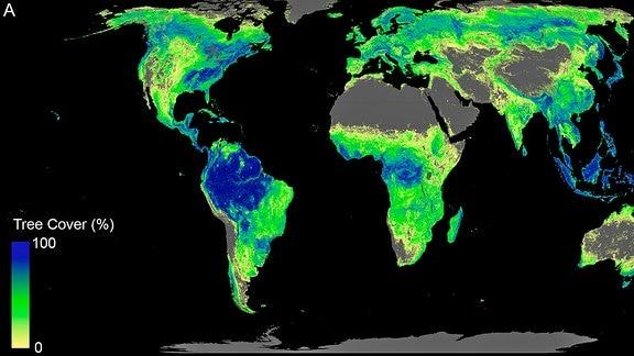 Land, das sich für Bäume eignen würde