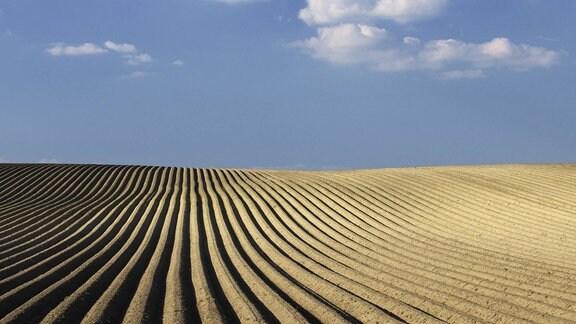 Kartoffelfeld im Frühling
