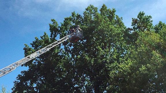 Feuerwehrdrehleiter im Einsatz am Baum.
