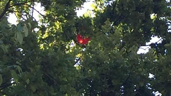 Ein rotes Stück Stoff in einer Baumkrone
