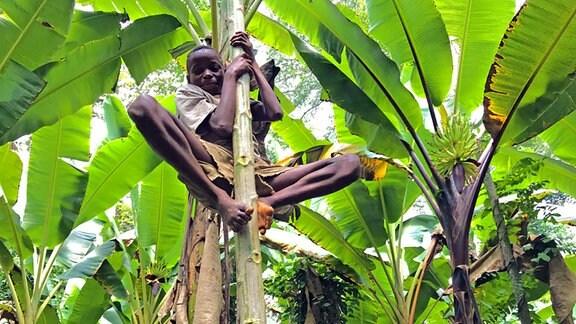 Kind kletter an einer Palme hinauf