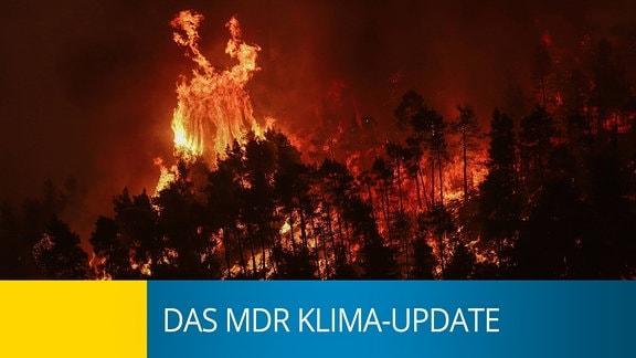 Ein brennender Wald, am unteren Bildrand steht Klima-Update