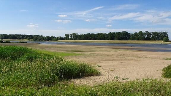 Die Elbe im Juni 2018 fließt sehr schmal, der Rest des Flussbetts ist ausgetrocknet