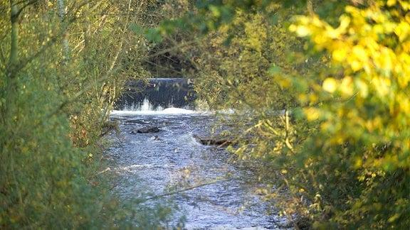 Ein Fluss umgeben von dichtem Gebüsch.
