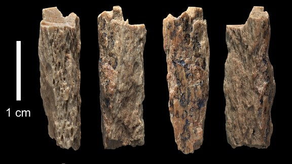 Knochenfragment aus Denisova-Höhle