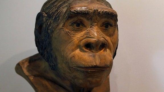 Kopf eines Homo heidelbergensis