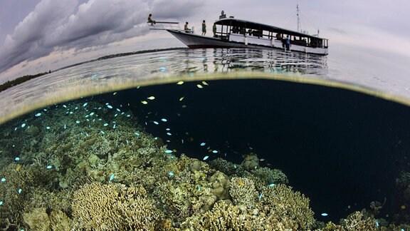 Ein Boot fährt über einem Korallenriff in Indonesien.