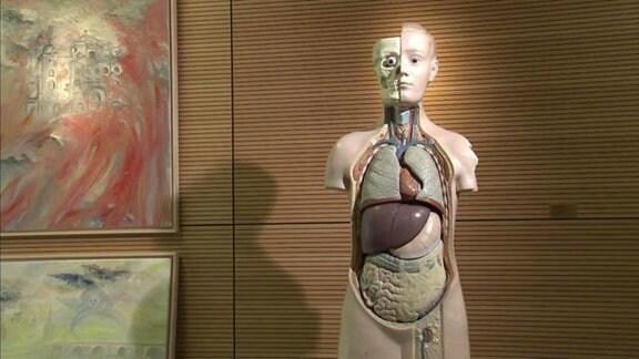 Ein anatomisches Modell.