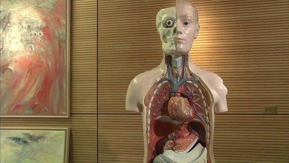Anantomisches Modell