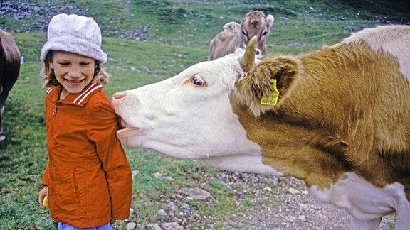 Hausrind leckt an Jacke eines Kindes.