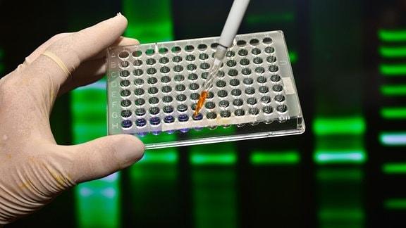PCR Test wird im labor ausgwertet.