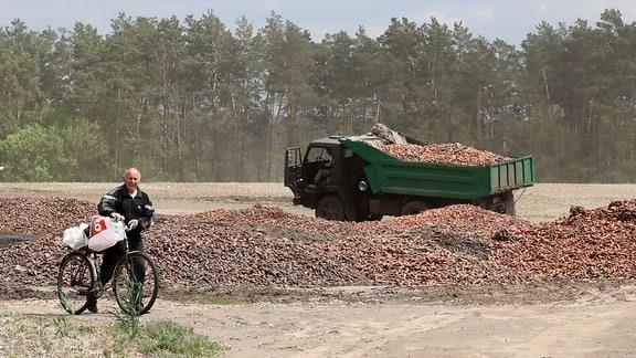 Karotten werden auf einem Feld entsorgt