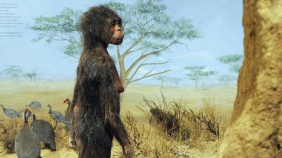 Lucy wurde 1974 in Äthiopien gefunden und rekonstruiert.