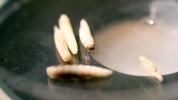 Fliegenlarven im dritten Larvenstadium unter Mikroskop
