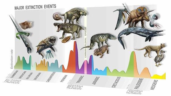 Die verschiedenen Massenaussterben in der Erdgeschichte.