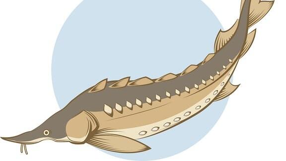 Illustration - Fisch