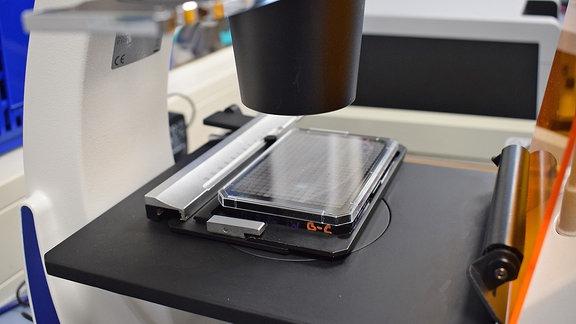 Krebstellen unter Mikroskop