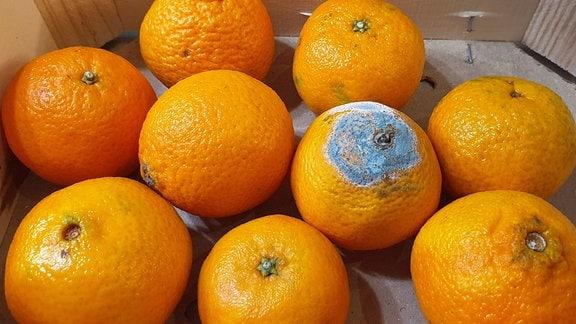 Orangen in einer Kiste, eine ist verschimmelt