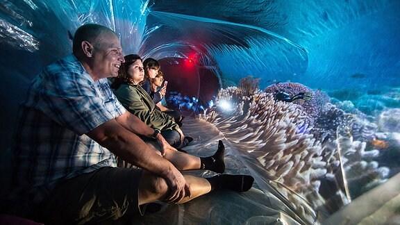 Menschen sitzen und schauen sich eine Illusion von Korallen an.