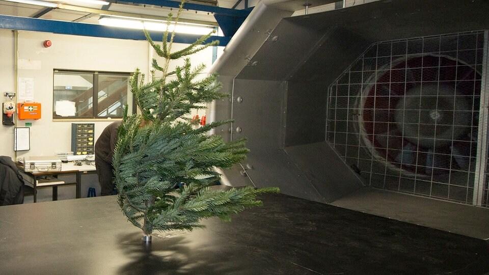 Tannenbaum Aachen.Wieviel Wind Verträgt Der Weihnachtsbaum Mdr De