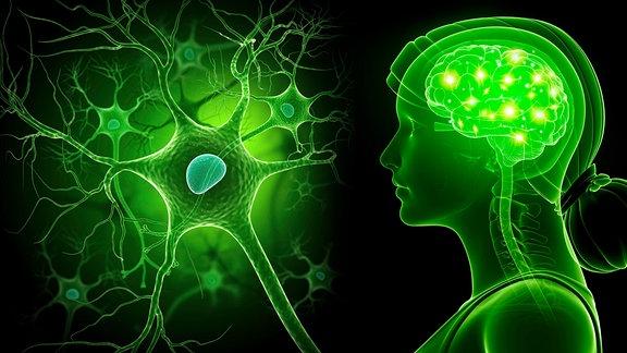 Menschliches Gehirn und Nervenzelle
