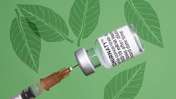 Nahaufnahme einer Ampulle mit einem mRNA-Impfsoff beim Herausziehen mit der Spritze. Grüner Hintergrund, schematische Blätterillustrationen auf Hintergrund verteilt.