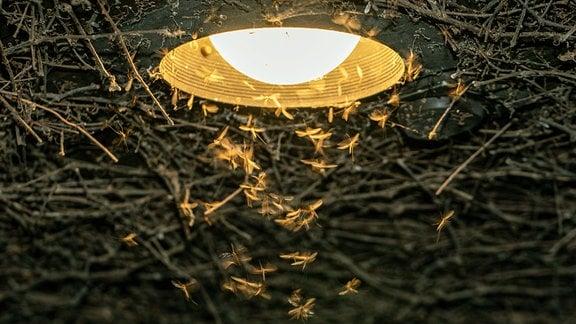 Wintermuecken, vom Licht angezogen, schwirren nachts um LED-Terrassenleuchte