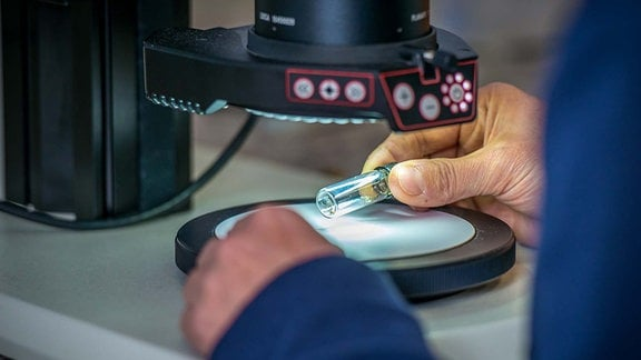 Mückenanalyse unterm Mikroskop