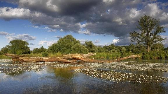 Fluss Mulde bei Dessau