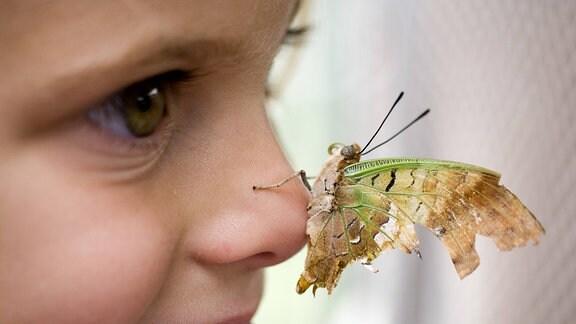 Schmetterling auf einer Kindernase
