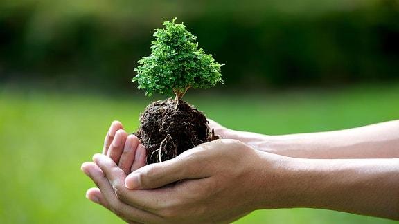 Symbolbild ein Baum in einer Hand