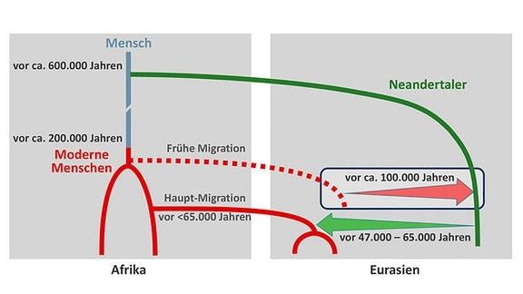 Szenario für die Vermischung zwischen modernen Menschen und Neandertalern