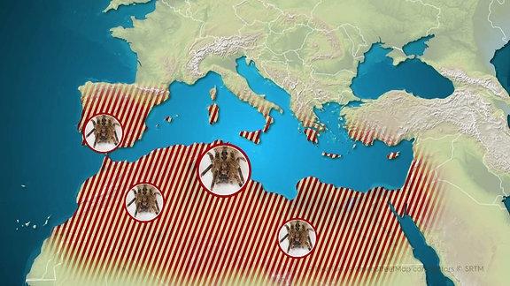 Eine Karte, die das Verbreitungsgebiet der Nosferatu-Spinne zeigt.
